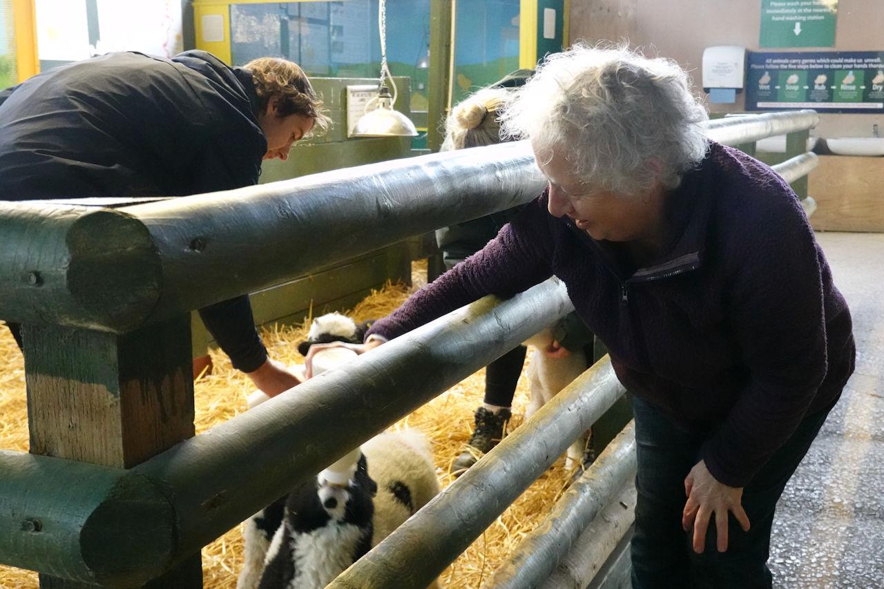 Mary feeding lambs